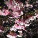 No.4248 雨の夜桜・・・